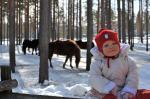 Jag och hästarna
